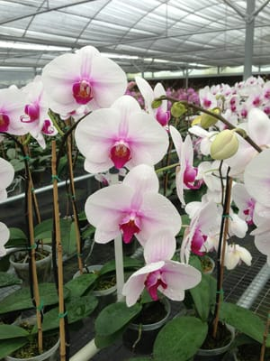 Photo Of Chons Orchid Nursery Apopka Fl United States Beautiful
