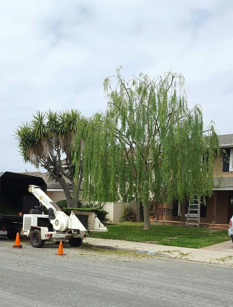 TreeCare Arborists - 23 Reviews - Tree Services - Garden Grove, CA ...