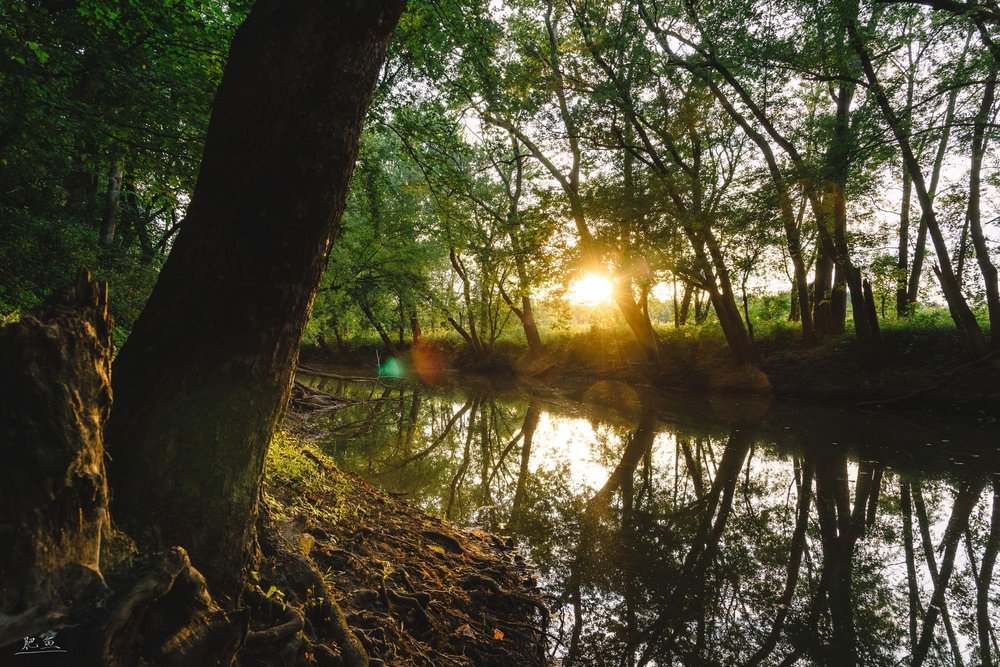 Lake of the Woods Forest Preserve, Buffalo Trace Prairie: 701 N Lombard St, Mahomet, IL
