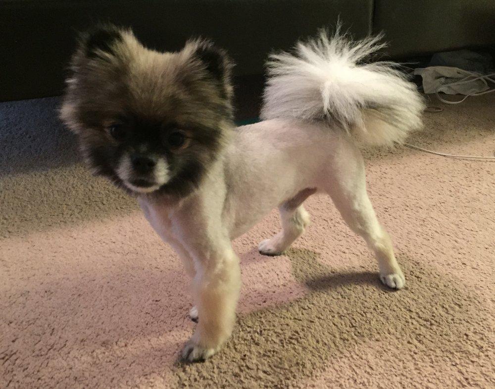 still a dog s world 16 photos 13 reviews pet groomers 915 e rh yelp com
