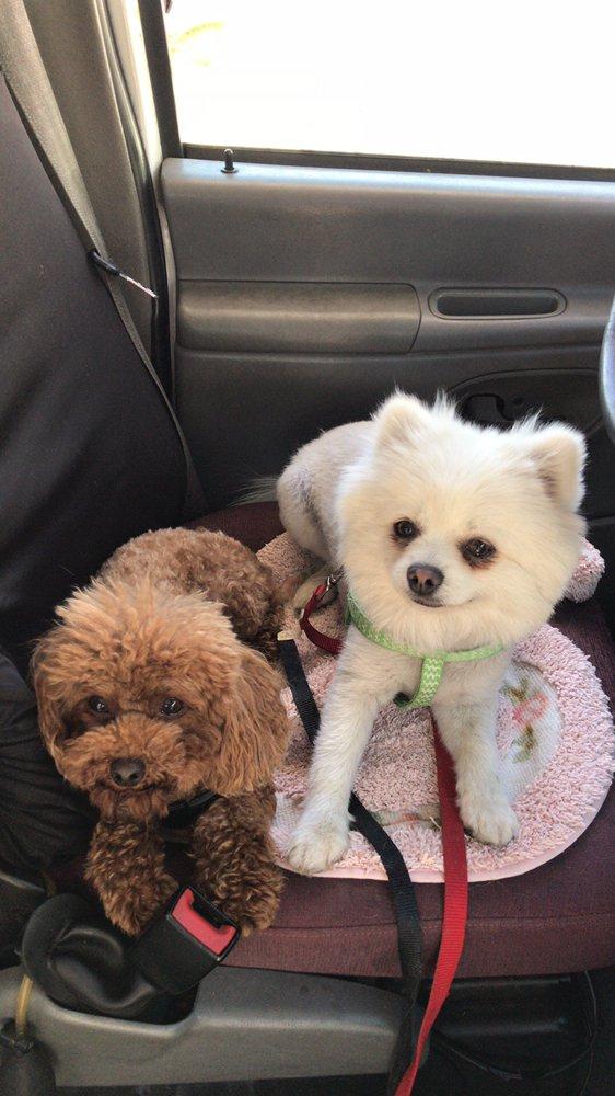 Pawfect Express Pet Spa: 516 N Montebello Blvd, Montebello, CA