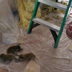 A Team Rodent Control - 40 Photos & 76 Reviews - Pest