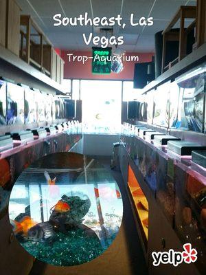 Trop Aquarium 3125 E Tropicana Ave Ste D Las Vegas Nv Pet S Mapquest