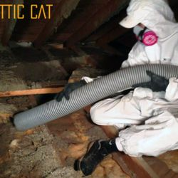 Photo of Attic Cat - Rodent Exclusion Company - Oakland CA United States & Attic Cat - Rodent Exclusion Company - 43 Photos u0026 85 Reviews - Pest ...