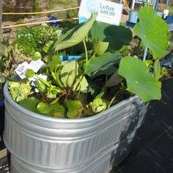 Bon San Lorenzo Garden Center   17 Photos U0026 62 Reviews   Nurseries U0026 Gardening    235 River St, Santa Cruz, CA   Phone Number   Yelp
