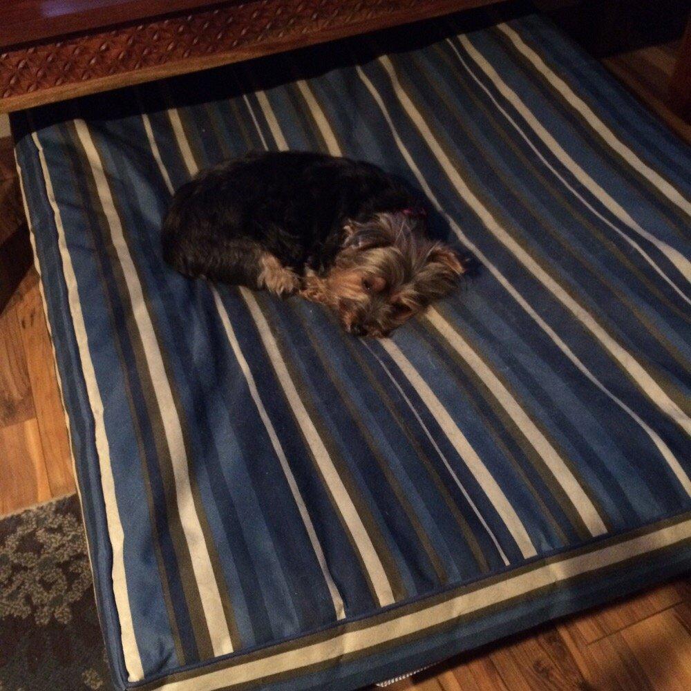 Fur Star Pet Care: 2029 Riverside Dr, Columbus, OH