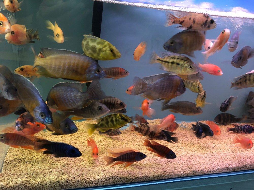 Hung Ming Aquarium - 21 Photos & 76 Reviews - Local Fish
