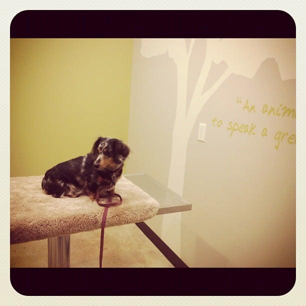 Shady Oak Veterinary Clinic: 10015 Minnetonka Blvd, Minnetonka, MN