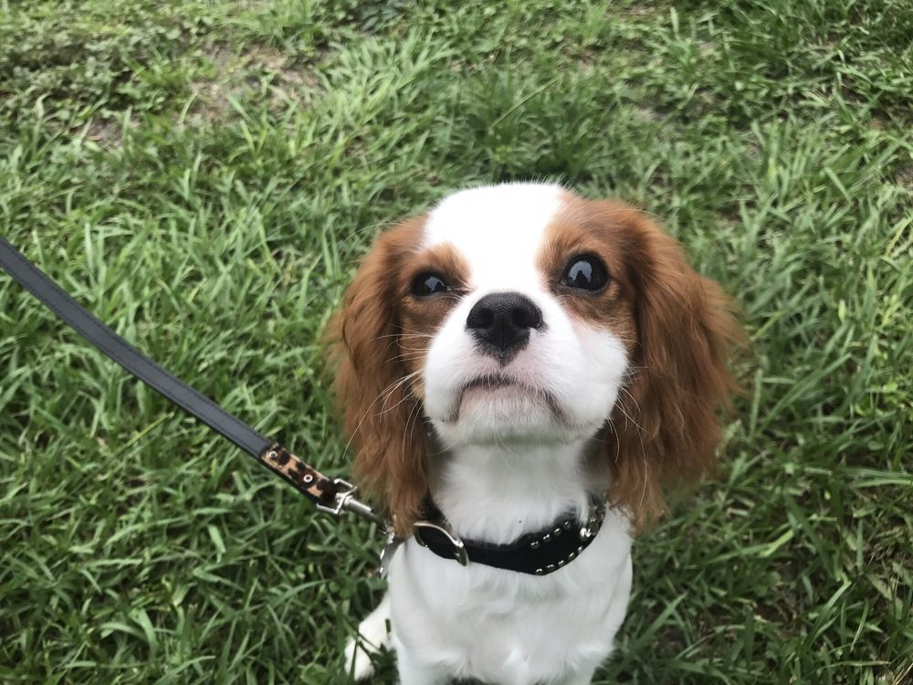 Canine Connection: Clearwater, FL