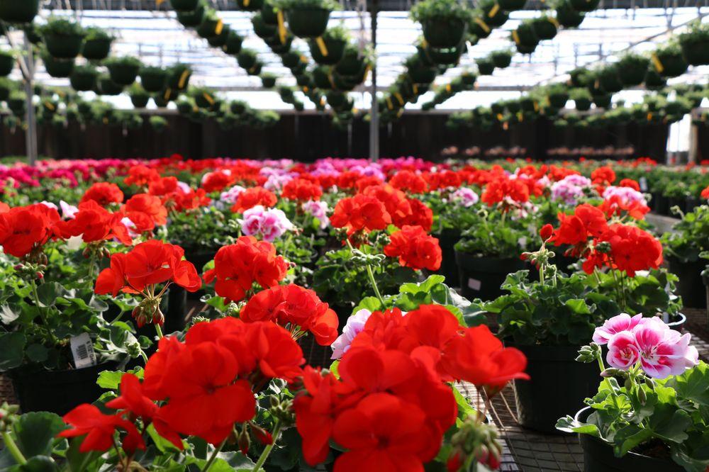 Precure Nursery & Garden Center