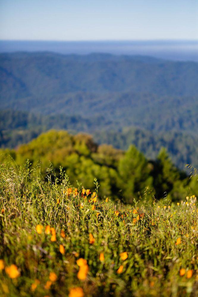 Russian Ridge Open Space Preserve: Skyline Blvd & Alpine Rd, Palo Alto, CA
