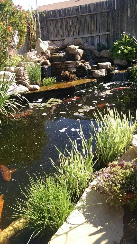 The Backyard Pond