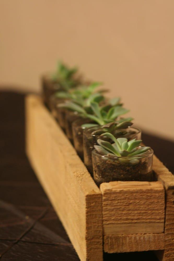 Succulent Terrarium Delivery Denver Yelp