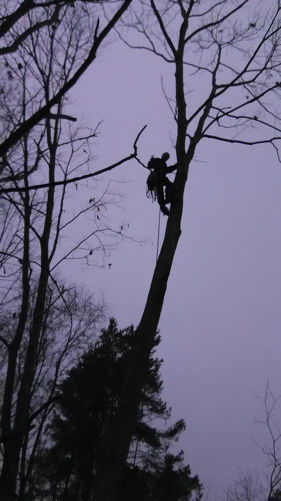 Tree Guys Tree Service: Bangor, MI