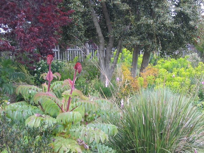 Good companion planting yelp - Mendocino coast botanical gardens ...