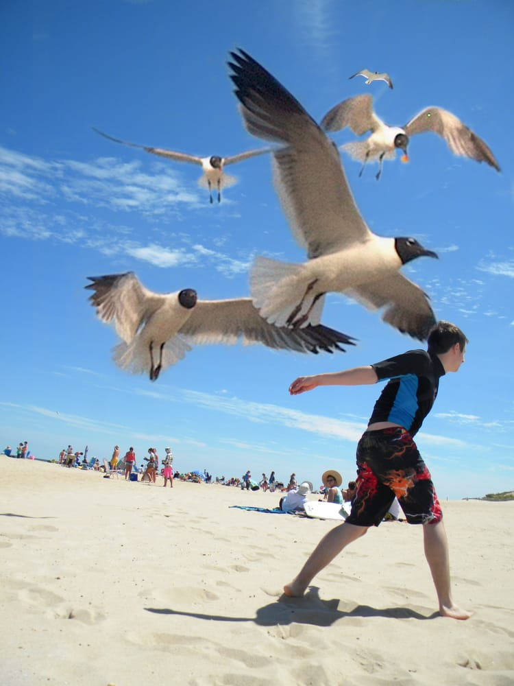 No The Gulls Aren T Really That Big It Just Seems That