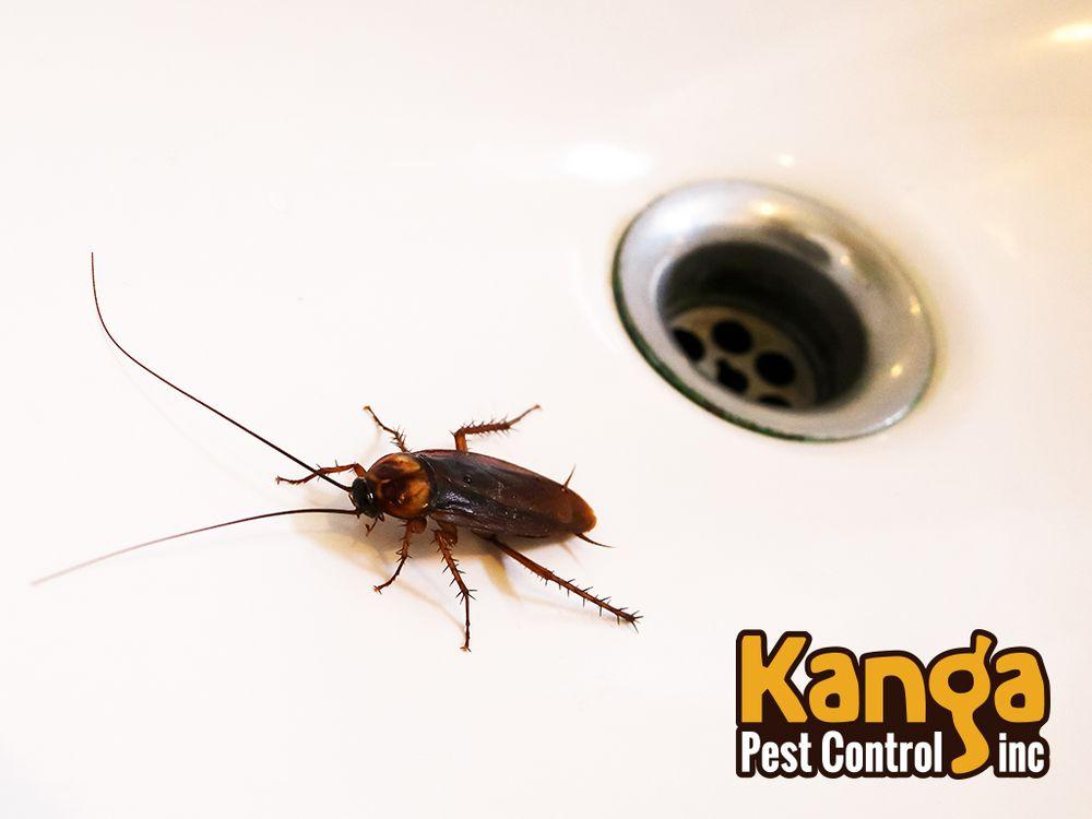 Kanga Pest Control