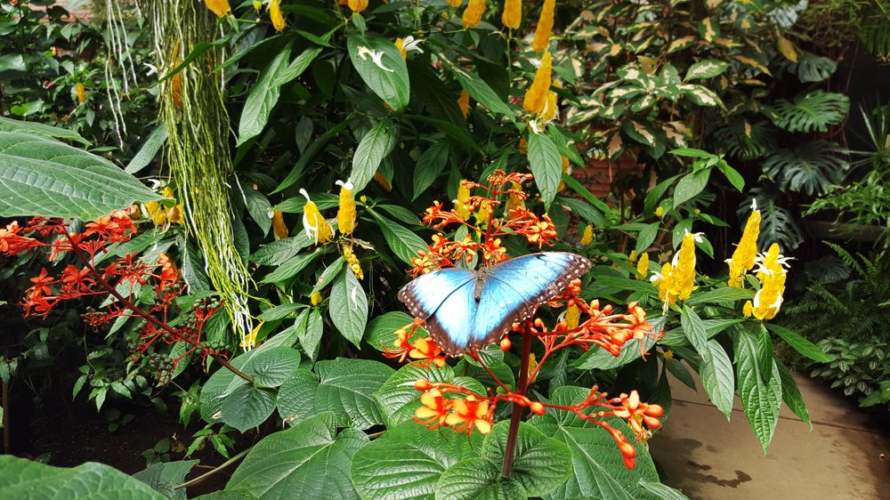 Magic Wings Butterfly Conservatory & Gardens: 281 Greenfield Rd, South Deerfield, MA