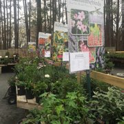 Basil 3 And Other Photo Of King S Greenhouse Stallings Nc United States Info On Attracting Hummingbirds