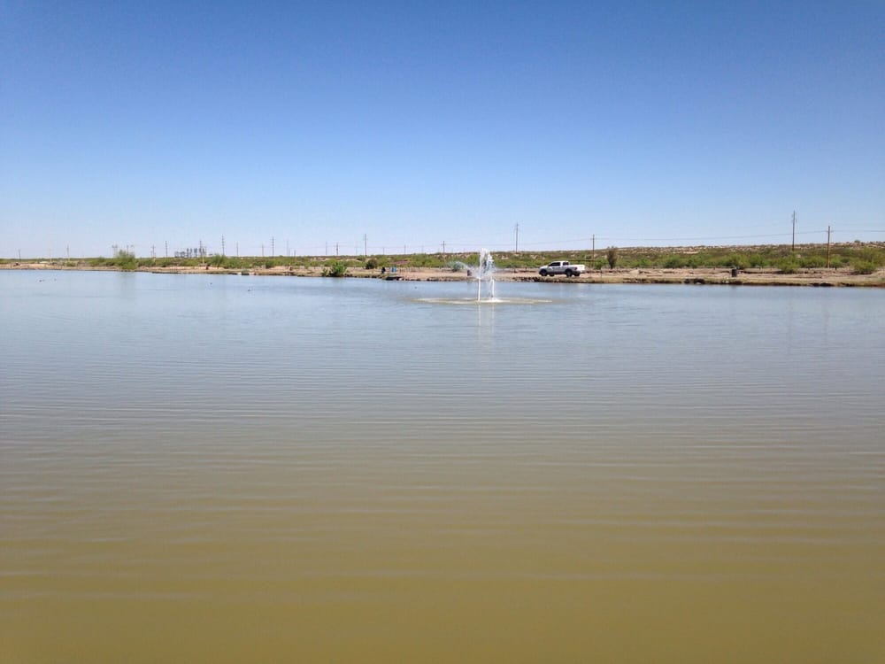 Plainview lakes fishing fort hancock tornillo tx for Where can i go fishing near me