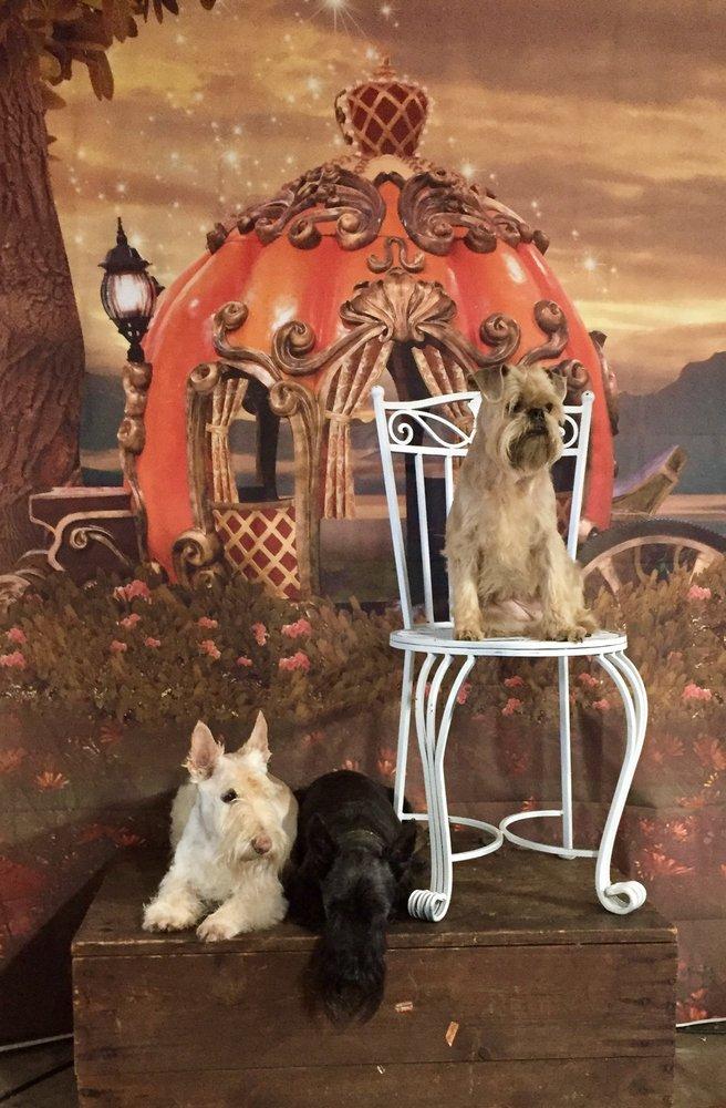 Cinderella Pet Salon: Blue Springs, MO