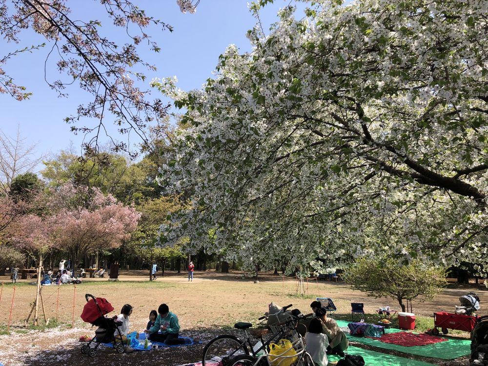 Inokashira Park West