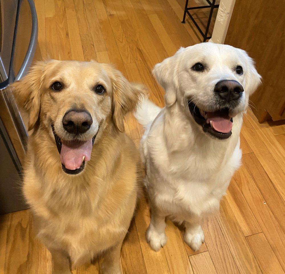 Wiggle Waggles Doggy Daycare: 904-32ND St, Anacortes, WA