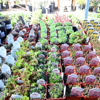 Photo Of North End Organic Nursery Garden City Id United States More