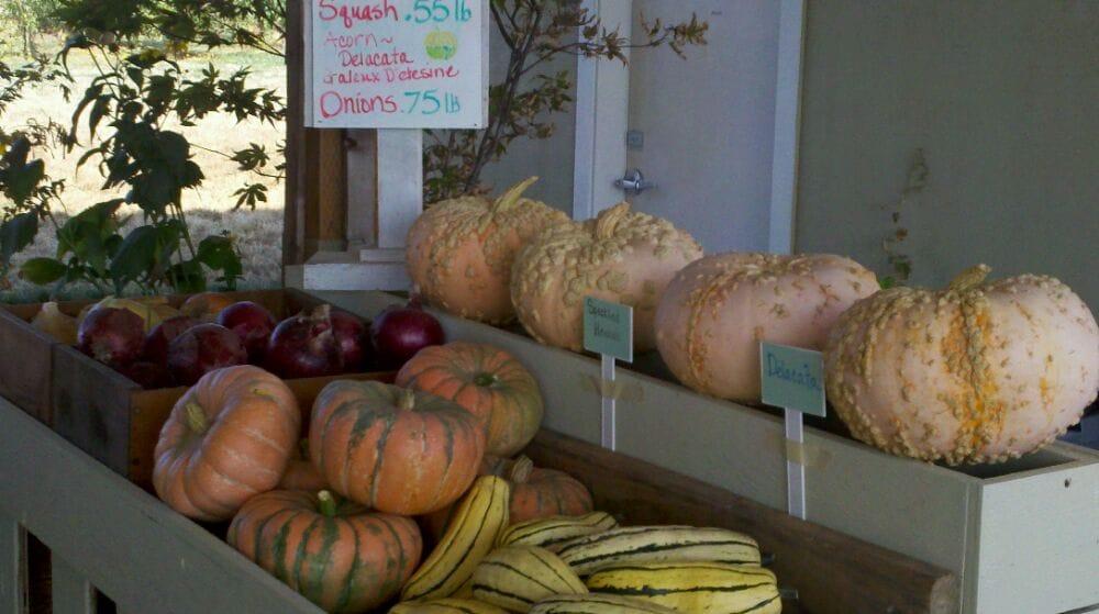 Fordyce Farm: 7023 Sunnyview Rd NE, Salem, OR