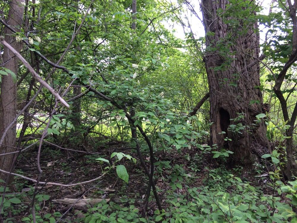 Amherst State Park Dog Park