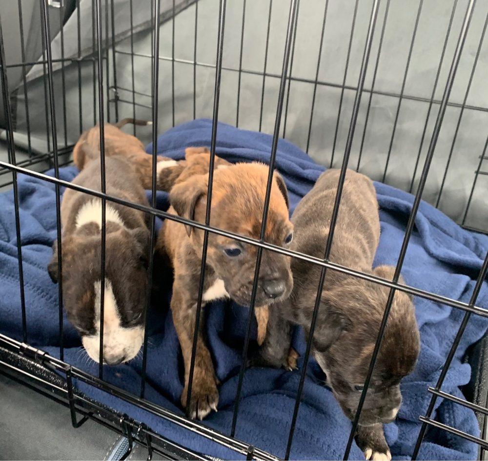 Morrow Animal Hospital: 6326 S Lee St, Morrow, GA
