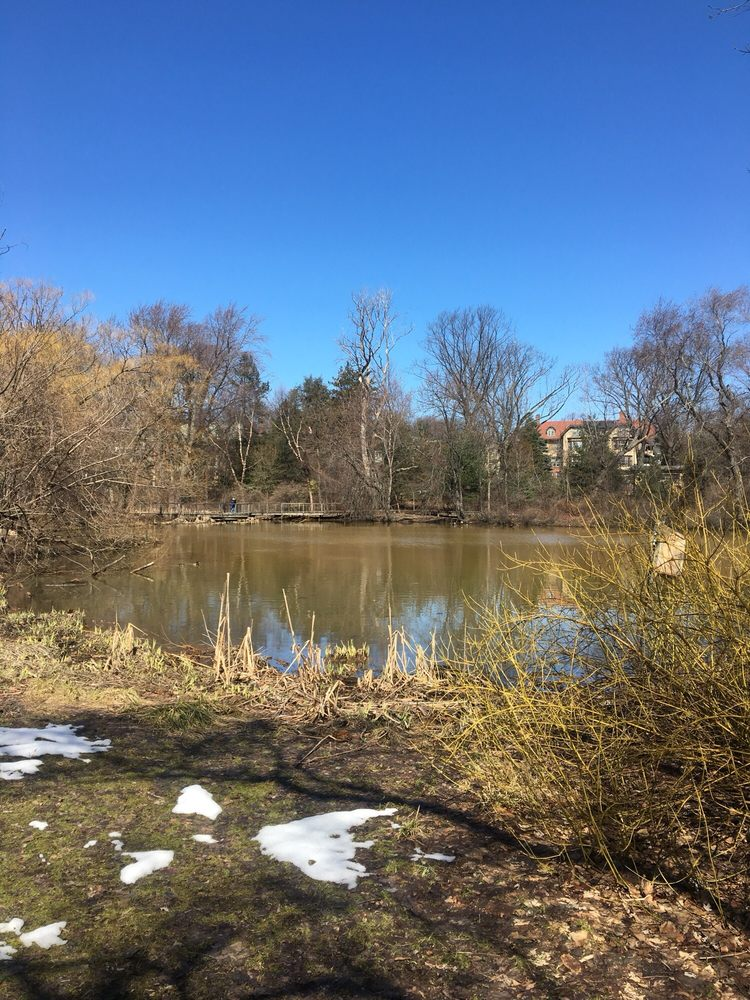 Hall's Pond Sanctuary