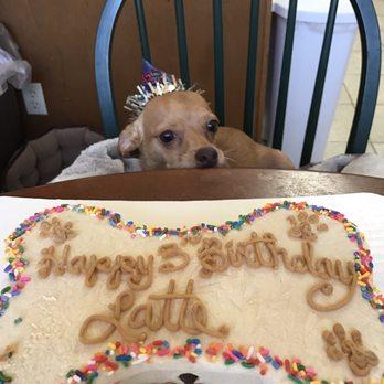 Photo Of Groovy Dog Bakery