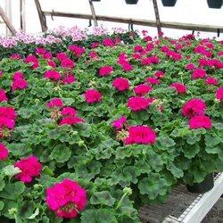 Photo Of Landau0027s Back Porch Gardens   Weimar, TX, United States