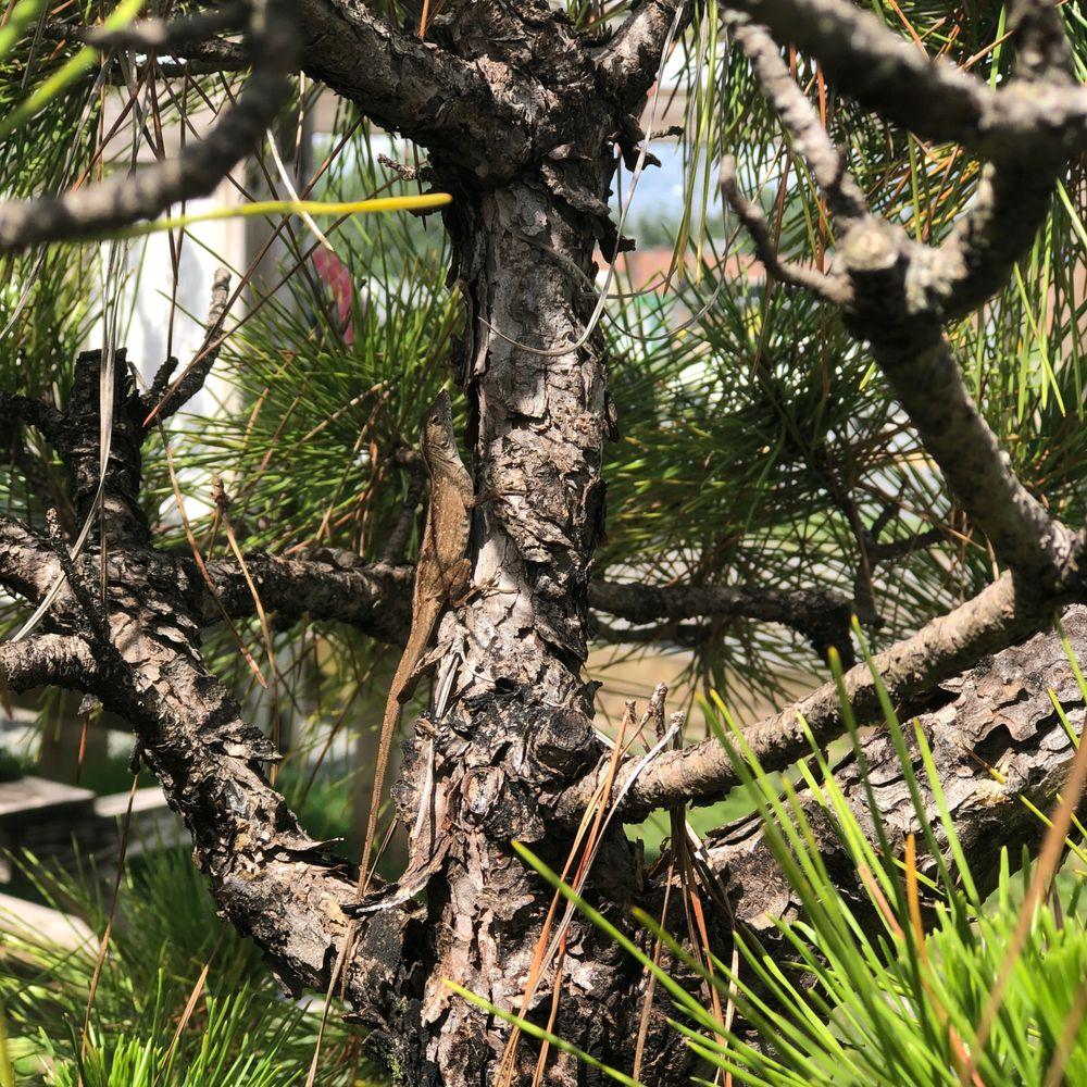 Bonsai by Dori: 3089 Main St, Cottondale, FL
