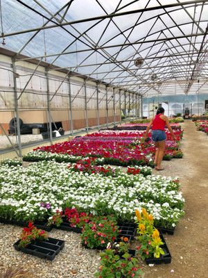 Dabney Nursery 5576 Hacks Cross Rd 5575 Memphis Tn 38125 Located At The Corner Of And Stateline Nurseries