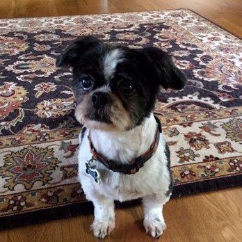 Wilsonville Dog Kennel