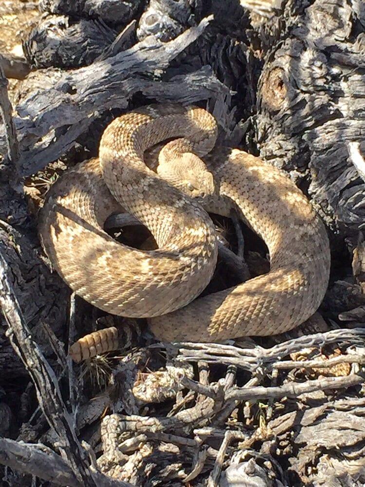 Animal Experts: 3291 W Cinnamon Dr, Tucson, AZ