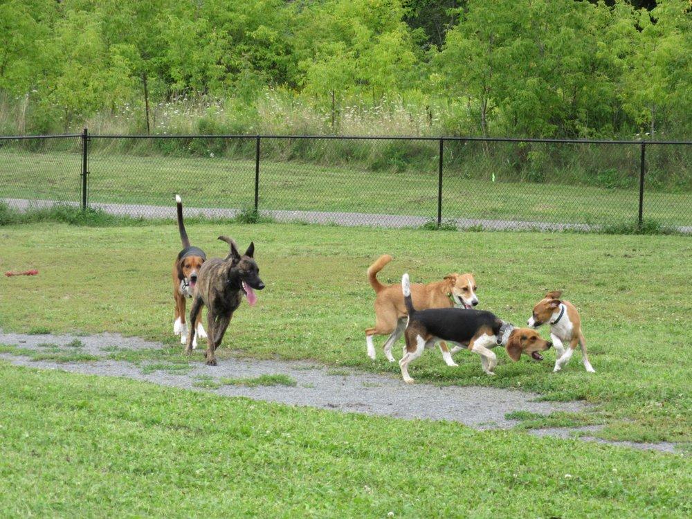 Gananoque Off Leash Dog Park