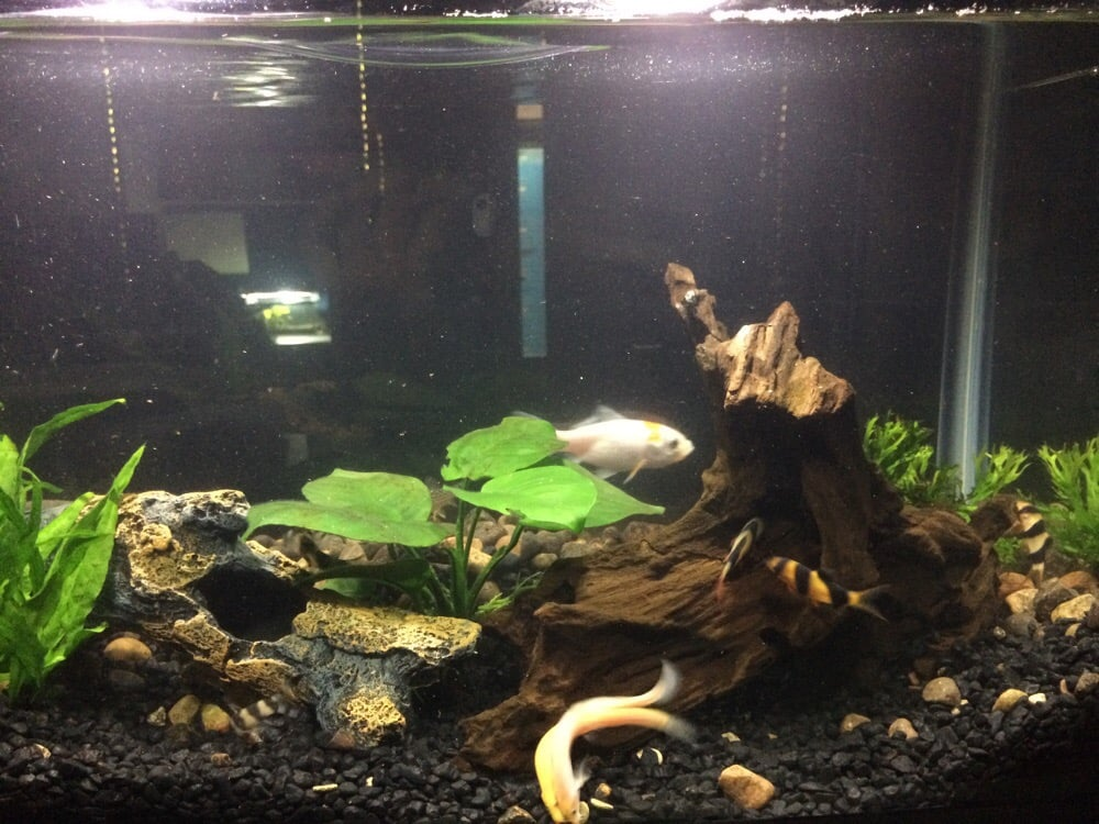 plants drift wood and accessories from petland   yelp