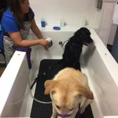 Diy dog wash 52 photos 16 reviews pet groomers 3595 webber photo of diy dog wash sarasota fl united states solutioingenieria Image collections