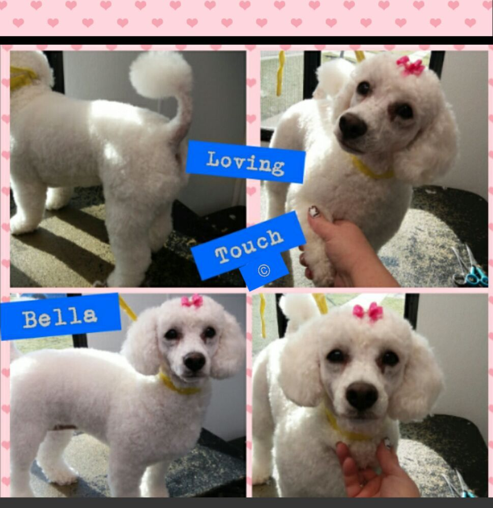 Loving touch mobile dog boutique pet groomers joliet il phone loving touch mobile dog boutique pet groomers joliet il phone number services yelp solutioingenieria Image collections
