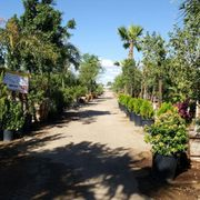 ... Photo Of Sun Valley Nursery   Phoenix, AZ, United States ...