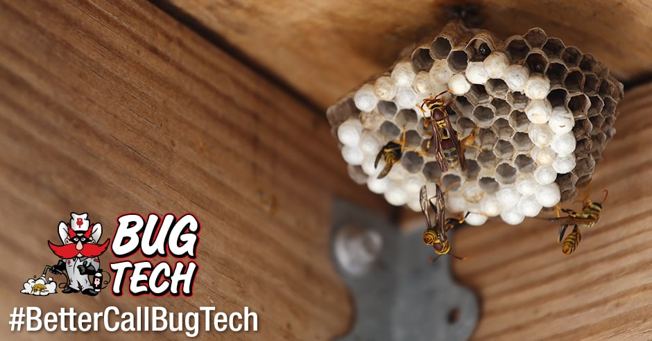 Bug Tech: 6613 19th St, Lubbock, TX