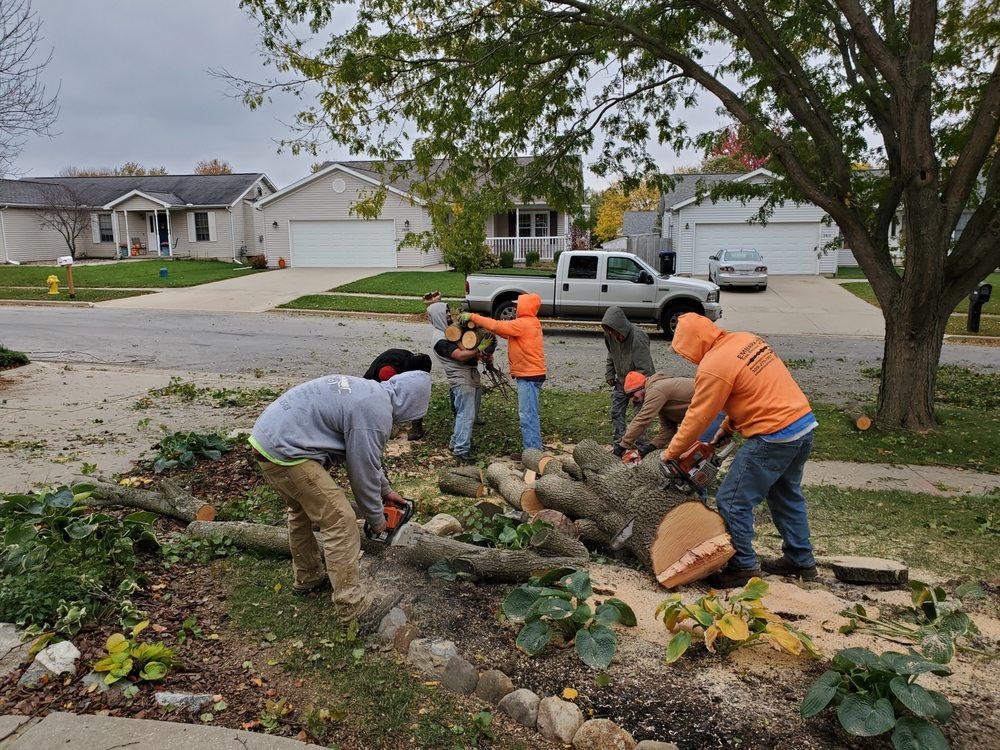 Embark Tree Removal: El Paso, IL