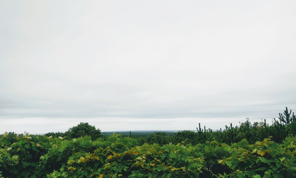 Napeague State Park: 1803 Montauk Hwy, Napeague, NY