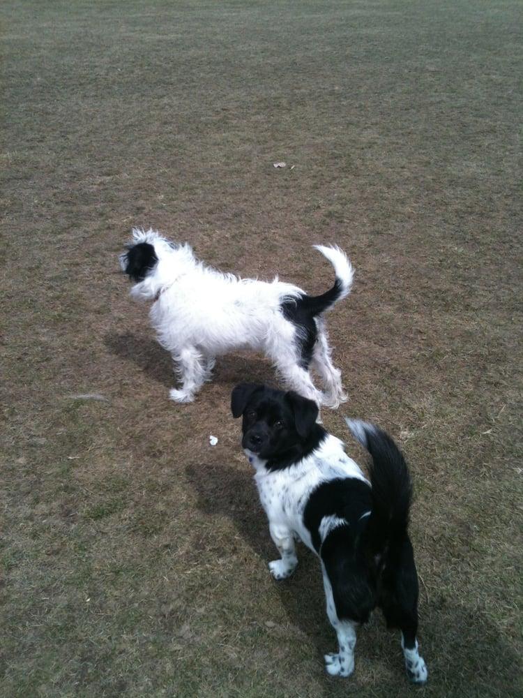 Crest Hill Cat And Dog: 2350 Copper Ct, Crest Hill, IL