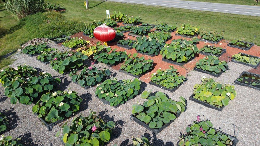 Bergen Water Gardens & Nursery: 7443 Buffalo Rd, Churchville, NY