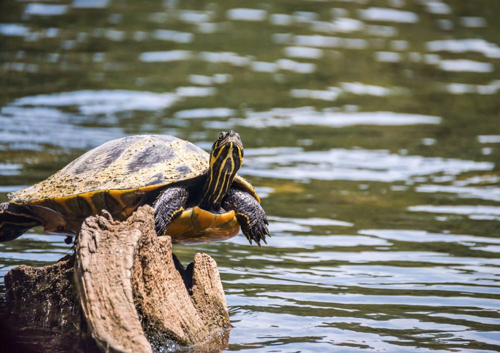 Edward Ball Wakulla Springs State Park: 465 Wakulla Park Dr, Wakulla Springs, FL