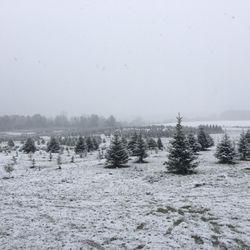photo of stumpfs u cut christmas tree farm cedarburg wi united states